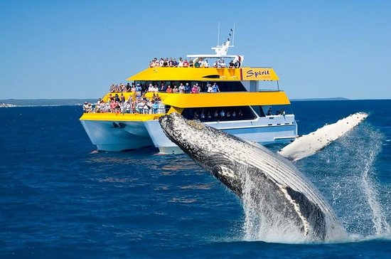 Spirit of Hervey Bay Whale Watching...