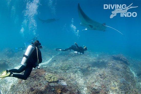 Mergulho com Manta Rays