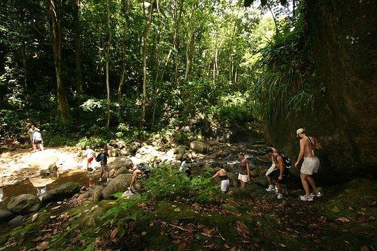 Aventura en el bosque tropical