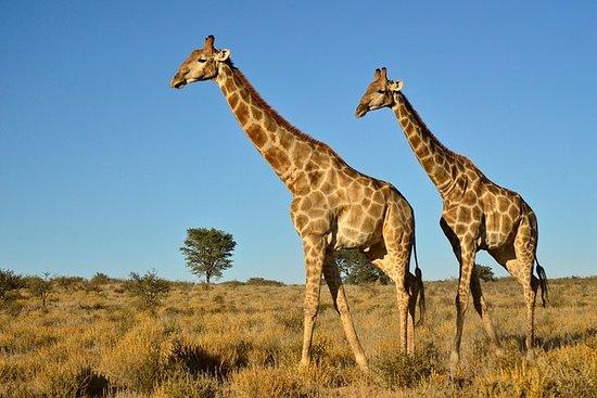 Halvdags Safari fra Durban
