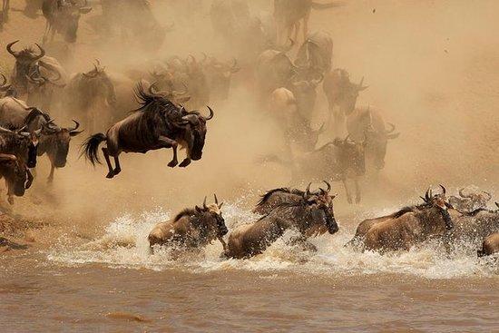 5 Day Scenic Tanzania Wildlife...