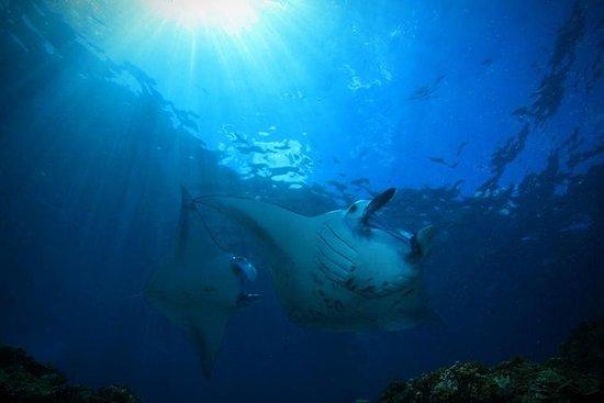 PADI Advanced Open Water Diver...