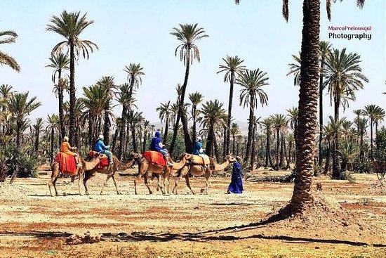 Trek de camelos em Marrakech