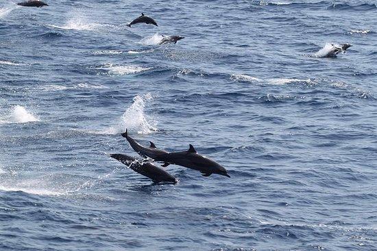 Hurghada: Snorkeltur på Dolphins...