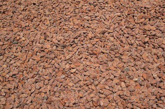 Cocoa Trail