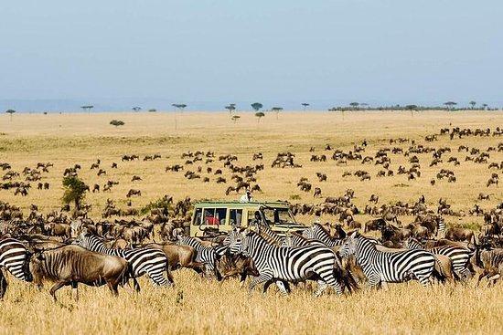 6 Days Migration Safari Ngorogoro...