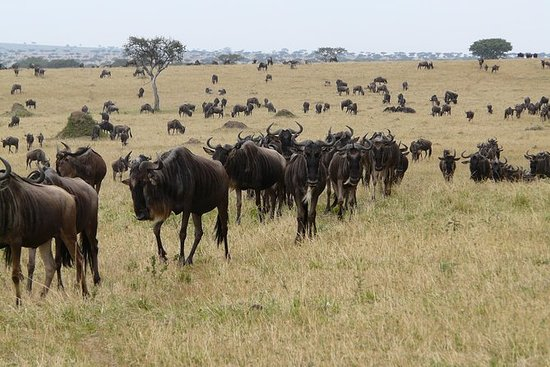 2 dagar Masai mara (Air Safari) Avgår ...