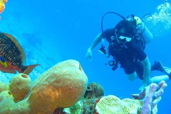 Experiencia de Buceo en Islas del...