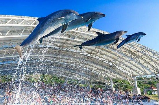沖縄美ら海水族館への一般入館料金