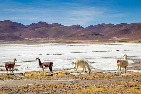 Venez partager la Table des Andes...