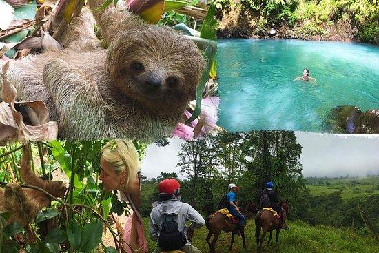雨林の森から荒れ果てた馬と馬の乗馬