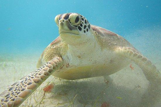 1/2 dia de natação com as tartarugas...