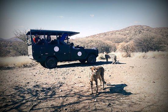 Cats Unlimited & Game Drive