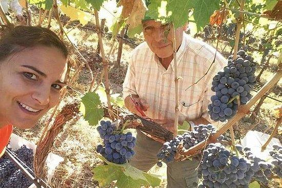 premium vin tur