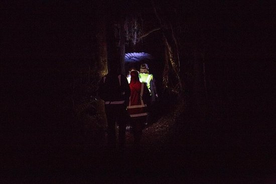 Nocturnal adventure Glow-worm tour