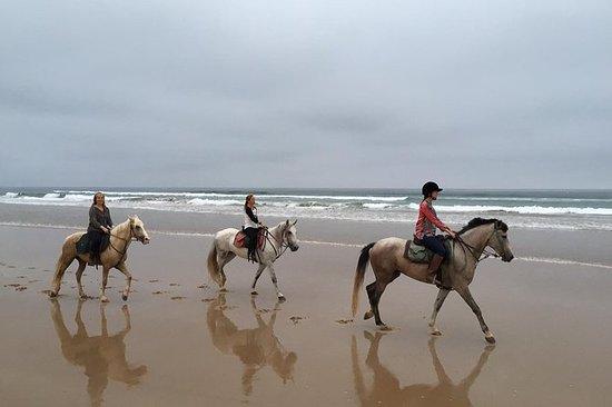 1 hora Sunset Horse Ride