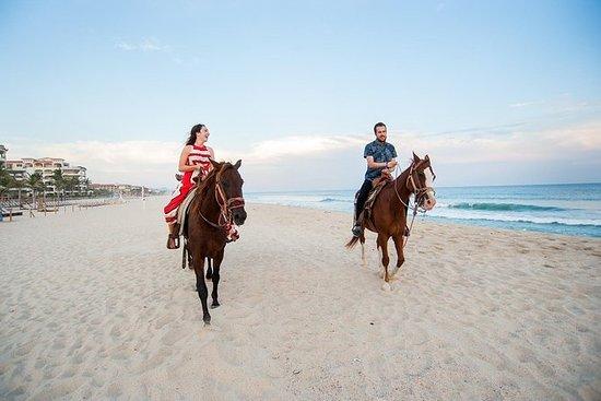 Pferde- und Kamelreiten in Agadir