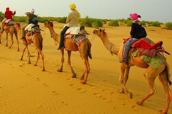 Halvdagskveld Camel Safari...