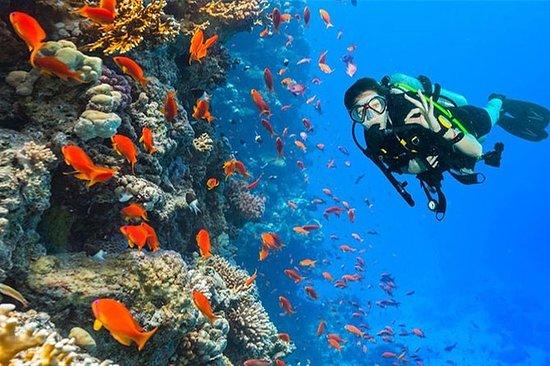 Ras Mohamed snorkling resa från Sharm ...