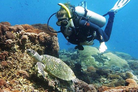 Bali Introductory Scuba Dive at Blue...