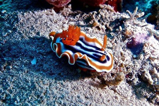Diving at Gili Tepekong, Mimpang and...