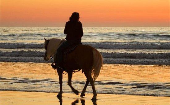 Desfrute de 2 horas de passeio à cavalo...