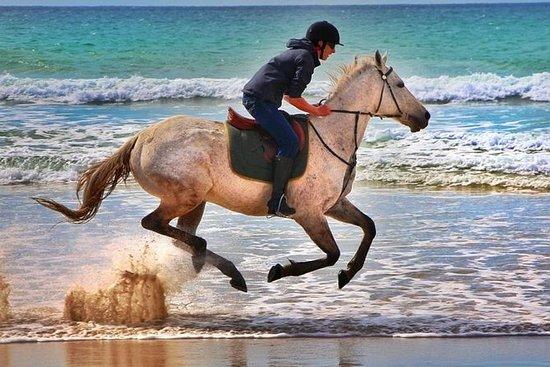 Taghazout trekking do cavalo