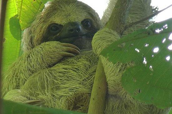 Sloth Watching Trail