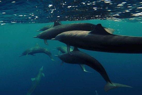 avistamiento de delfines, tortugas ...