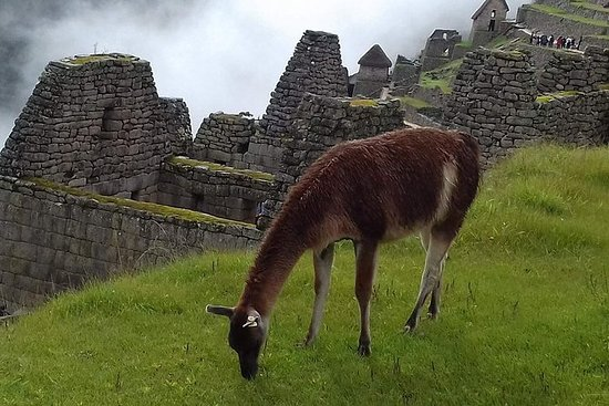 Guidet Machu Picchu tur fra Aguas...