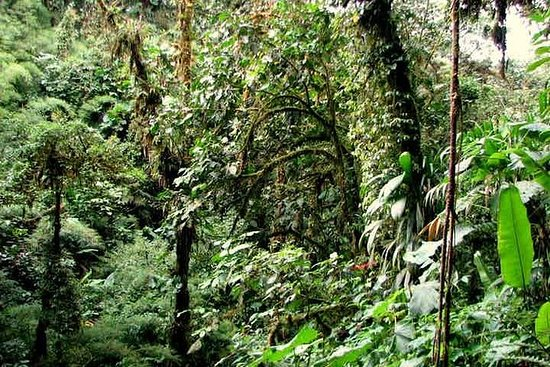 Santa Elena Cloud Forest Reserve...