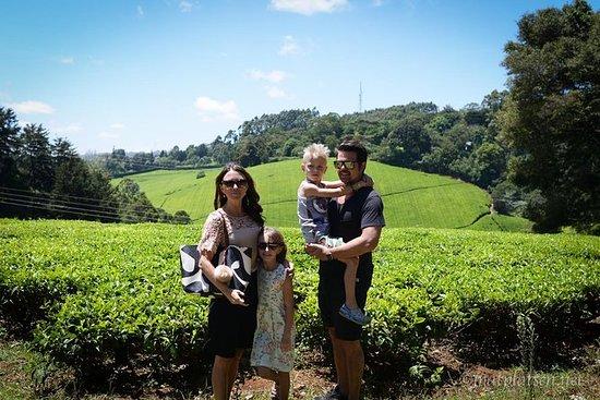 Nairobi til Kiambethu Tea Farm Tour