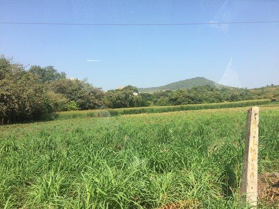Aarey Colony صورة فوتوغرافية