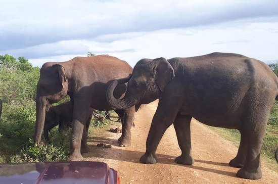 Privet Tour di 2 giorni Udawalawe