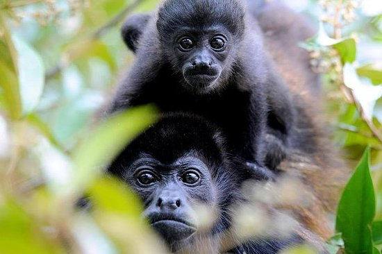 Billet d'entrée au parc des singes