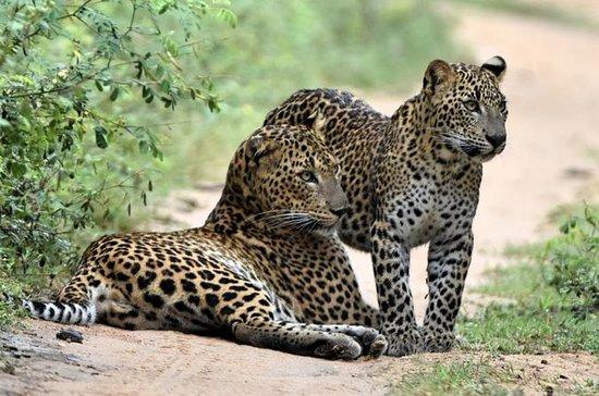 Special Leopard Safari Tour in Yala...