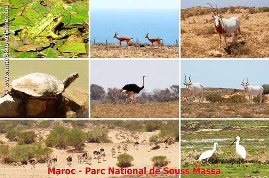 Ganztägige Wildtier-Tour durch Souss...