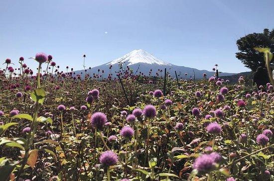 Mt Fuji Day Tour med Kawaguchiko Lake...