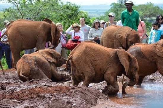 Private Full-Day Elephant Orphanage...