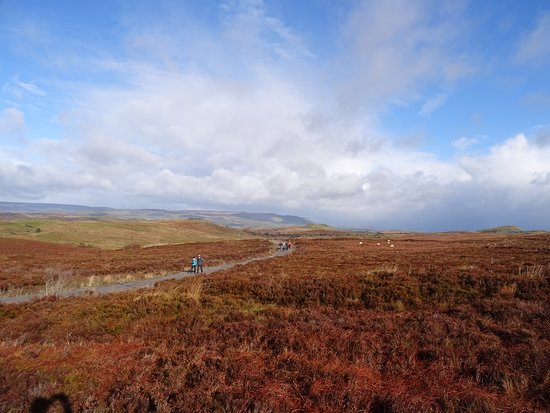 Cuilcagh Boardwalk Trail: Beautiful blue skies at ground level
