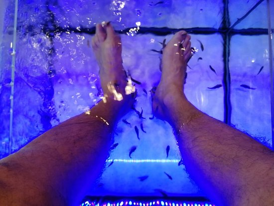 Ca Chatouille - Fish Spa & Co