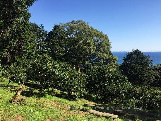 Matsumoto Farm