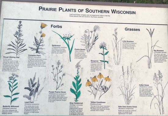 Bagley, WI: Some of the common prairie plants of Southern Wisconsin