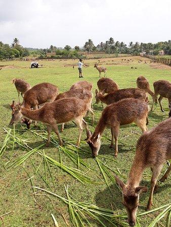 Camarines Sur Province صورة فوتوغرافية