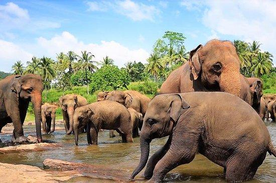 Escursione diurna a Sigiriya e