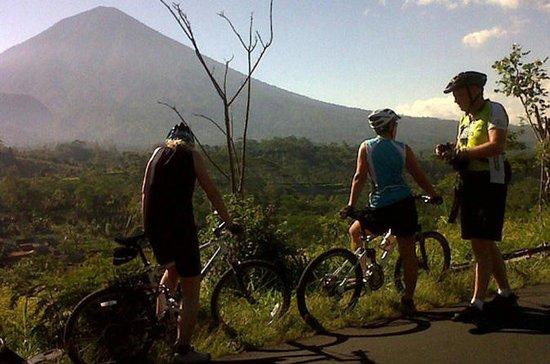 コスモバリ:キンタマーニの下り坂サイクリング、アグロトゥーリズム、イェプル寺…