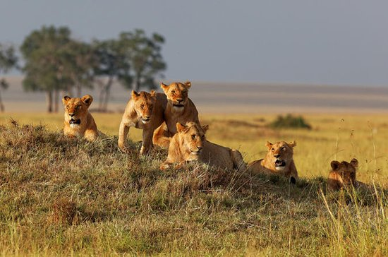 3 dias de experiência no Safari do...