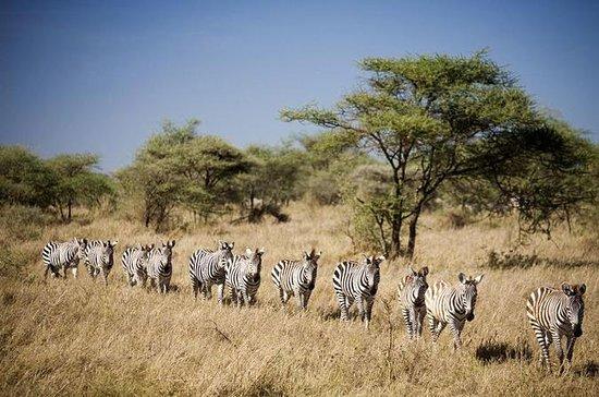 3-Day Selous Game Reserve a Selva da...