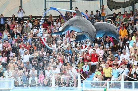 Dolphin Show in Sharm ElSheikh