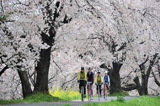 31 de março - excursão de ciclismo de...